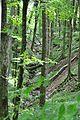 (10) Einzug des natürlichen Chaos in den Bannwald.jpg