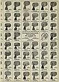 (Men's collars and neckties, United States, 1900's.) (3990094871).jpg