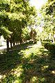 ® MADRID A.V.U. JARDIN DEL CASINO DE LA REINA - panoramio (35).jpg