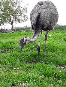 Fauna Wikipedia La Enciclopedia Libre