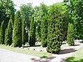 Братское кладбище - panoramio.jpg
