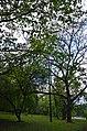 Біогрупа дерев Кам'янець-Подільського.jpg
