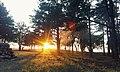 Захід сонця у Малокаховському борі.jpg