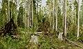 Иван Иванович Шишкин - Сосновый лес.jpg