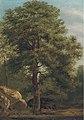 Иван И. Шишкин (приписывается) - Лесной сцене.jpg