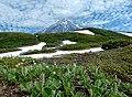 Камчатские цветы у подножия Корякской сопки.jpg