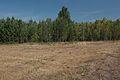 Колок к востоку - panoramio.jpg