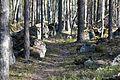 Линия Маннергейма - panoramio (15).jpg
