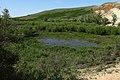 Остатки пруда в Большом овраге - panoramio.jpg