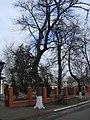 Охоронна дошка біля акації у Переяславі.jpg