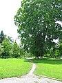 Парк в садибі М.Терещенка Андрушівка-1.jpg