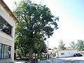 Площадът на село Гигинци.JPG