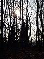 Украина, Киев - Голосеевский лес 225.jpg