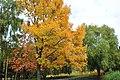 """Черкаський парк """"Перемога"""", код 71-101-5009 18.jpg"""