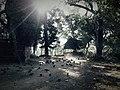श्लेष्मान्तक वन (मृगस्थली) 10.jpg