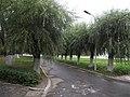 东北电力信息楼旁的林荫路 - panoramio.jpg