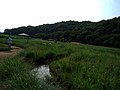 北山公園から八国山緑地を望む - panoramio.jpg