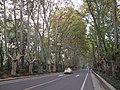 南京明陵大道 - panoramio.jpg