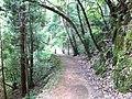 常清滝 散策道 - panoramio.jpg