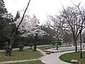 校园小径 campus road - panoramio.jpg