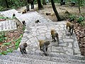 猴球崛起,黔灵山公园 Monkeys, GuiYang 20-04-12 - panoramio.jpg