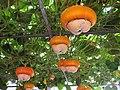 玩具南瓜 Toys Pumpkins - panoramio.jpg