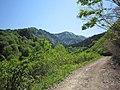 福島-新潟県境林道 - panoramio.jpg