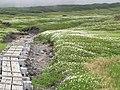花の木道(Boardwalk flowers) - panoramio.jpg