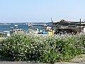 花盛り - panoramio.jpg