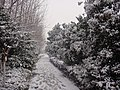 雪景 - panoramio - 柳鲲鹏 (6).jpg