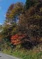 鮮やかな色 - panoramio.jpg