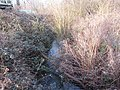 -2021-01-31 Tributary of the river Ant at Bacton wood Bridge (2).JPG