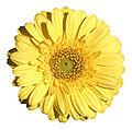 - Flower 06 -.jpg