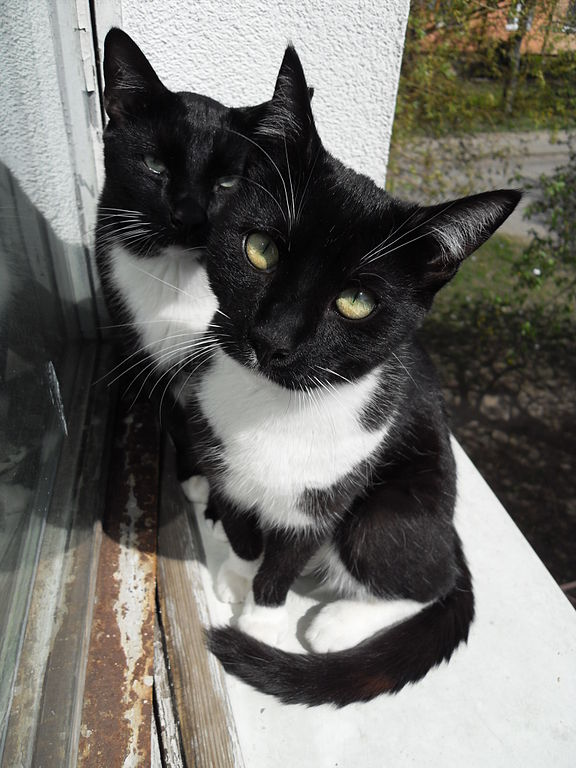 Black Cat Adpot Cardiff