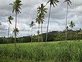 10 Minutes west of Labasa, Vanua Levu, Fiji - panoramio.jpg