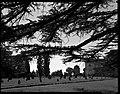 17.06.1964. Vue de la propriété. (1964) - 53Fi4696.jpg