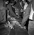 18.05.76 à l'école vétérinaire de Toulouse, opération d'un brocard jeune cerf (1976) - 53Fi900.jpg