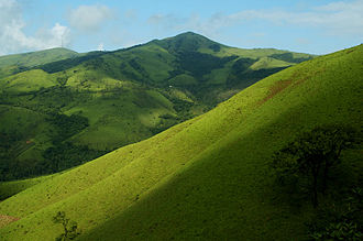 Kemmangundi - Landscape in Kemmangundi with shola and grassland
