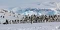 2007 Snow-Hill-Island Luyten-De-Hauwere-Emperor-Penguin-23.jpg
