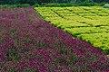 2010,landscape,park,trees,gardens,flowers,中国, 广东省, 广州市, 番禺区 - panoramio.jpg