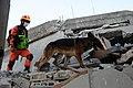 2010년 중앙119구조단 아이티 지진 국제출동100118 세인트제라드 지역 수색활동 (64).jpg