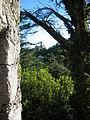 2011-04-21 Portugal 206 - Sintra (5694345323).jpg
