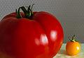 2013 09 10 Tomate.jpg