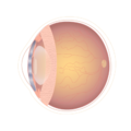 201405 retina.png