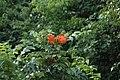 2014 Borneo Luyten-De-Hauwere-Flower-02.jpg