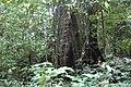 2014 Borneo Luyten-De-Hauwere-Forest-04.jpg