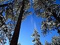 2015-366-11 Snow Plume (24033771690).jpg
