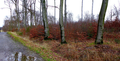 2018-12-22-December-watercolors.-Hike-to-the-Ratingen-forest. File-27.png