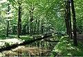 20180504505DR Hermsdorf (Ottendorf-Okrilla) Hermsdorfer Schloßpark.jpg