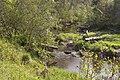 2019 05 Riezupes dabas parks (21).jpg